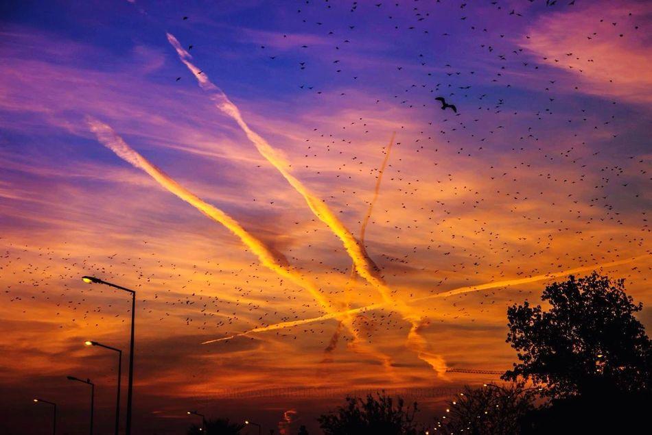 Photography Omk Atakum Atakumsahil Birds Sky Sun