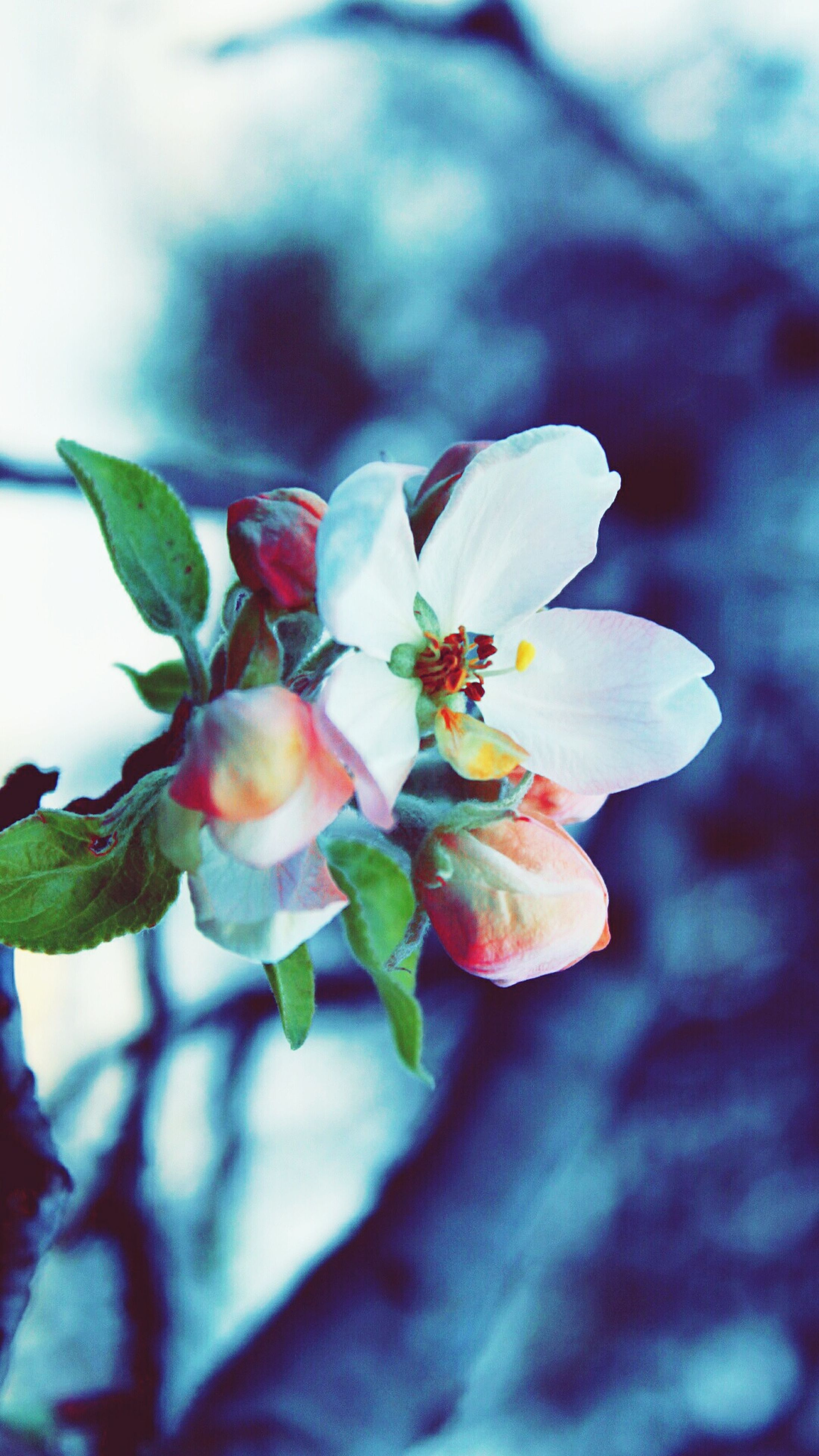 flower, petal, freshness, growth, fragility, close-up, flower head, beauty in nature, leaf, focus on foreground, nature, plant, blooming, single flower, in bloom, bud, blossom, stamen, stem, outdoors