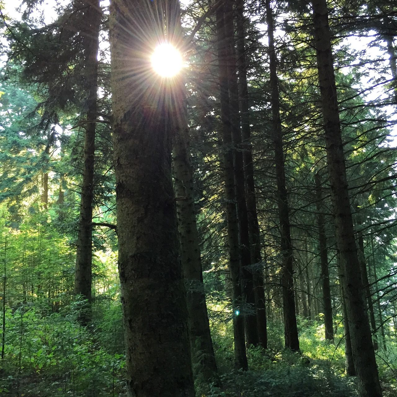 Sunlight In Woodland Of Villefranche-Sur-Mer
