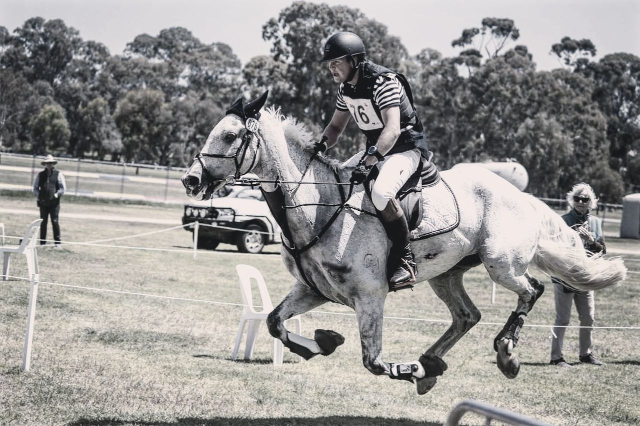 Horse Horseback Riding People EventPhotography Eventing Working Animal One Person Equestrianism Animal Themes Domestic Animals Equestrianlife Equestrianphotography Adults Only Equestrian Life Animal One AnimalRiding Men Equinephotography Sitting Day Bonding Jockey Adult Outdoors