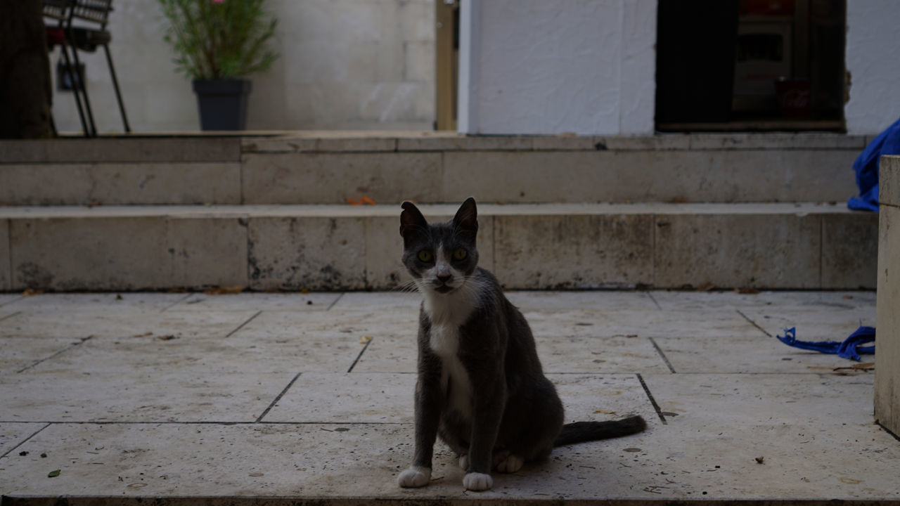 domestic cat, animal themes, one animal, mammal, sitting, domestic animals, pets, feline, cat, looking at camera, portrait, architecture, outdoors, day, no people, built structure