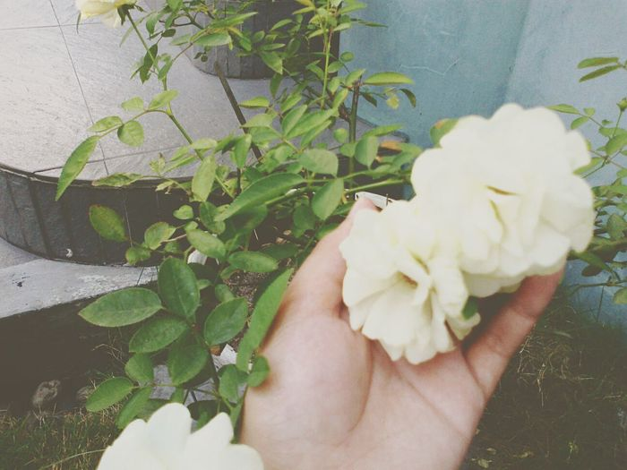 Flowers can be also the reason of girl's happiness ❤😁 First Eyeem Photo