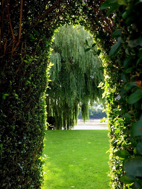 Serene Green Sunshine On Green Leaves Grass Willow Tree Arch In The Hedge The Thames Secret Garden Oasis In The City EyeEm LOST IN London Postcode Postcards