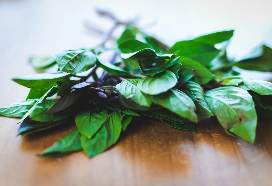 Aromatic Herb Close-up Day Food Freshness Healthy Eating Indoors  Ingredient Leaf Leaves No People Sweet Basil Thai Basil
