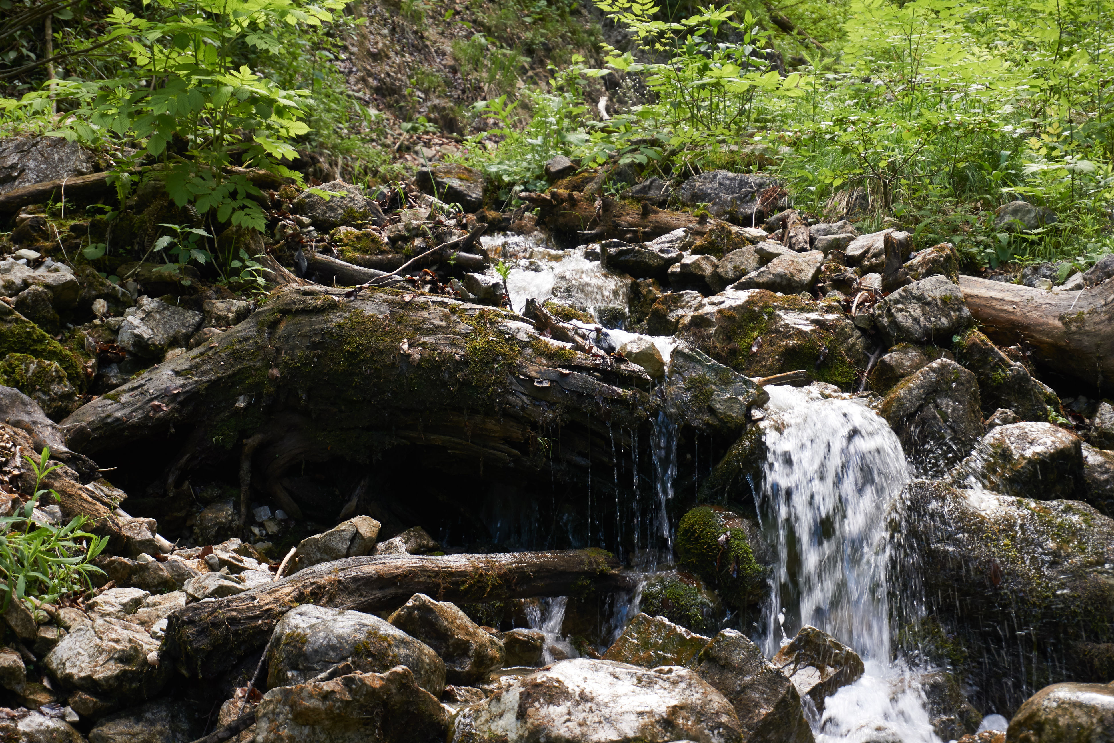 nature, rock - object, waterfall, motion, forest, beauty in nature, river, outdoors, water, no people, day, tree