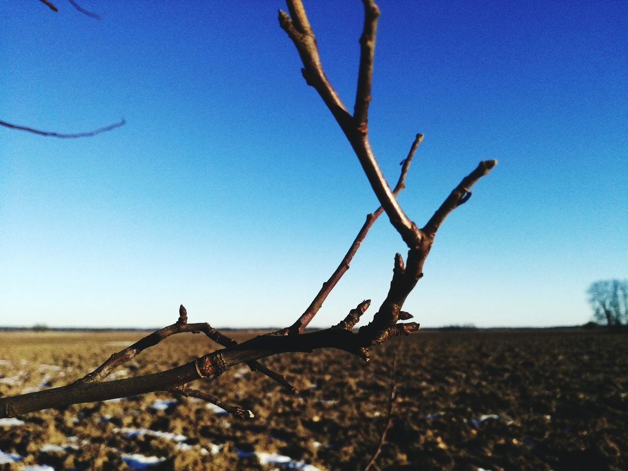 Blue Desert Landscape Branch Nature Outdoors Arid Climate Scenics Sky Illuminated Earth Colours Grassfield Space Winter Beauty In Nature Shiny Sunlight High Angle View The Way Forward Sun Rays Shadow No People Day Tree Sand EyeEmNewHere