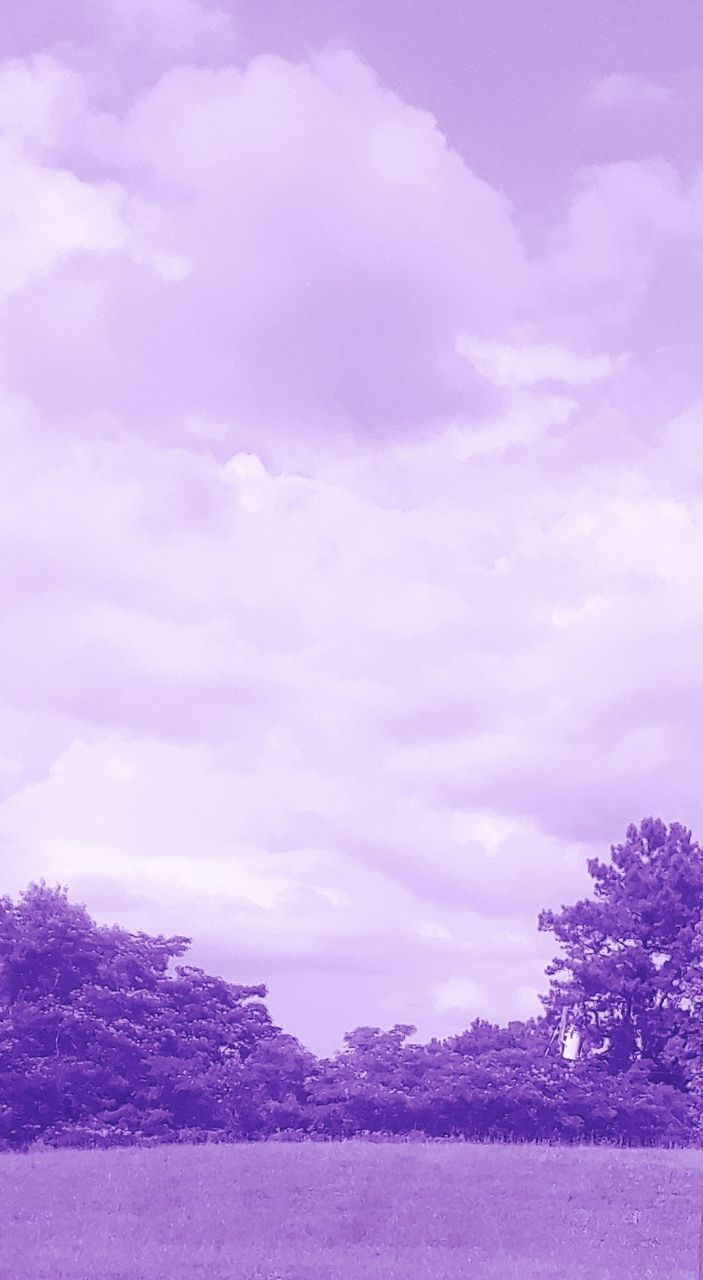 purple, sky, nature, tree, beauty in nature, tranquility, scenics, outdoors, no people, cloud - sky, tranquil scene, day, landscape, pink color
