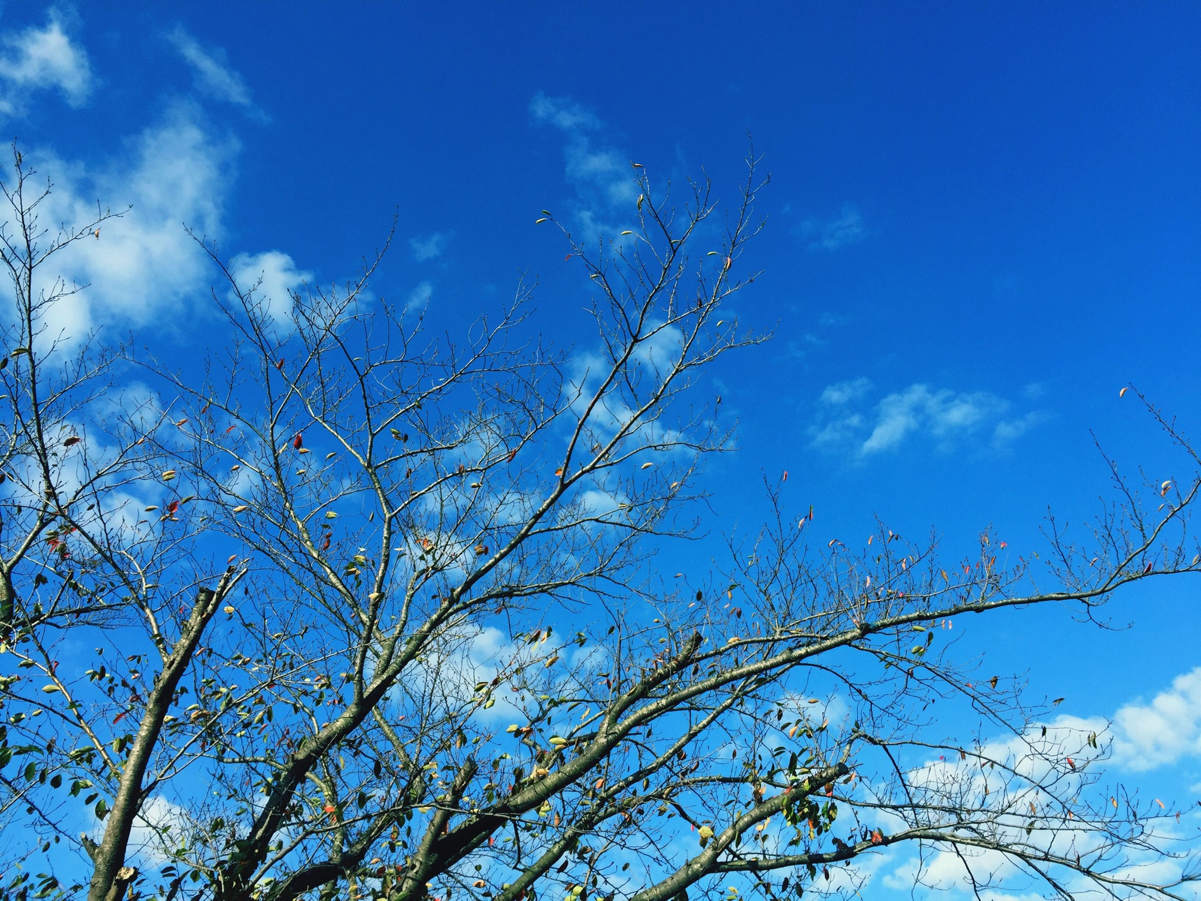 low angle view, sky, blue, branch, tree, bare tree, cloud - sky, nature, beauty in nature, tranquility, cloud, outdoors, day, scenics, growth, no people, high section, cloudy, tranquil scene, sunlight