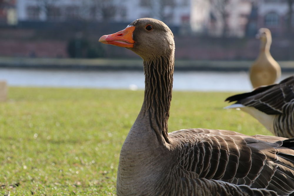 Frankfurt City #Frankfurt #YBPhotographie Animal Themes Close-up Day Grass No People Outdoors
