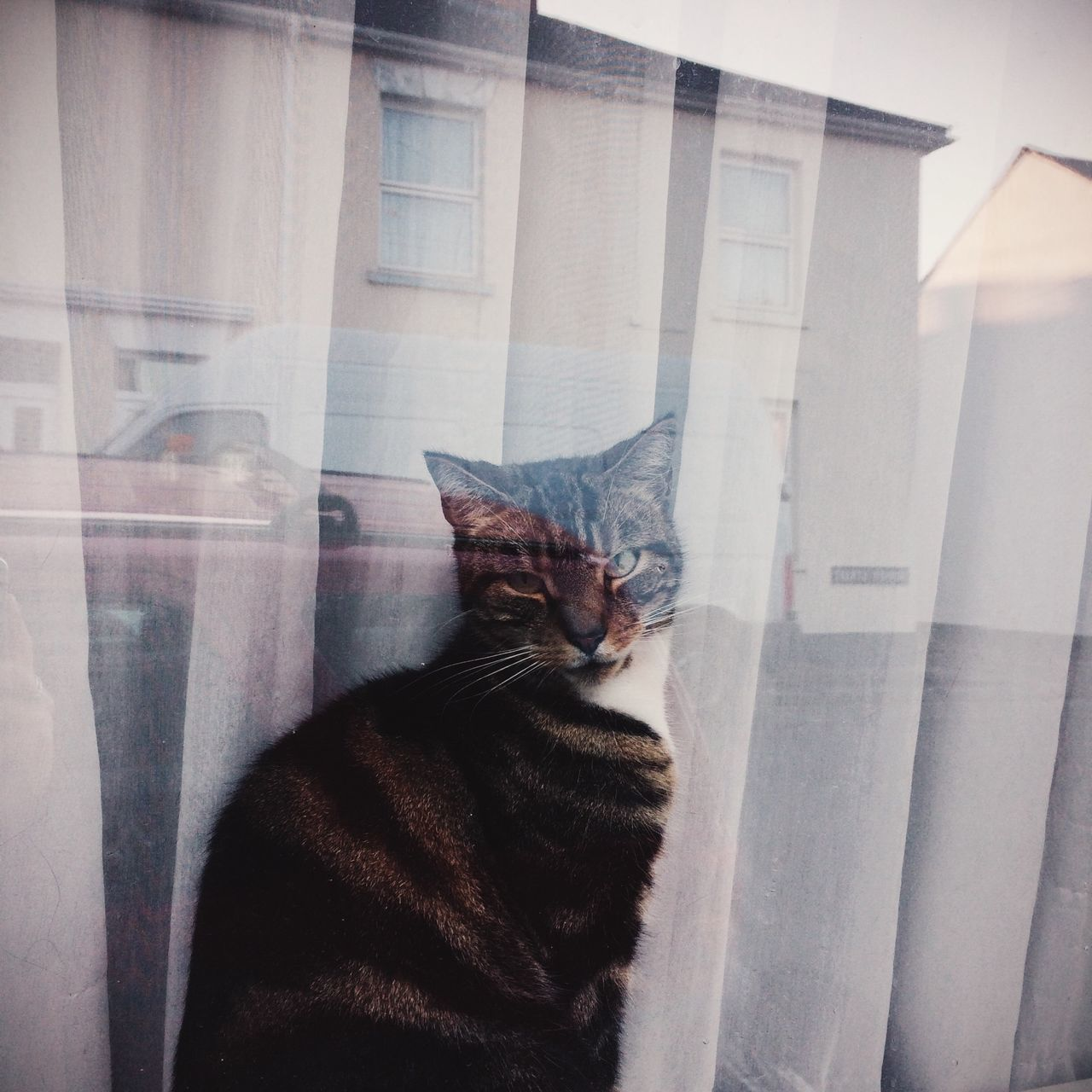 Beautiful stock photos of kitty, Animal Themes, Cat, Curtain, Day