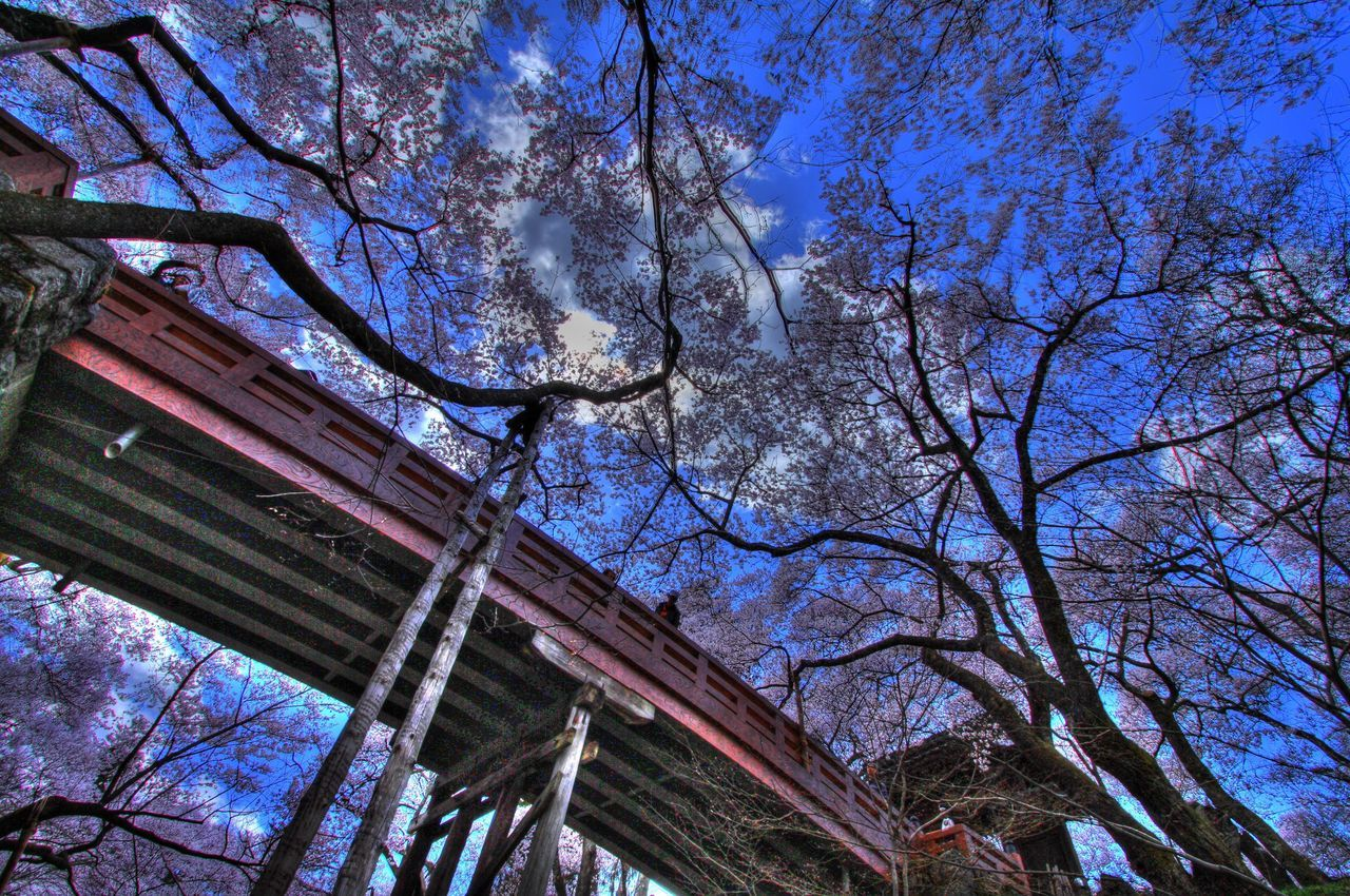 Japan Nagano Ina Takato Park Photography Spring Flowers Cherry Blossoms HDR Hdr_Collection