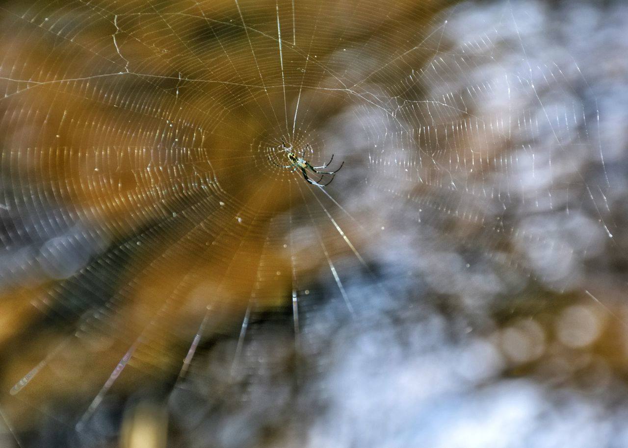 Itsy, Bitsy Spider Itsy Bitsy Spider Spider Spider Web Beauty In Nature Eyeem This Week Nikonphotographer Happigramma Iseeinpictures Thesmallestlittlethings Eatsleepdreamphotography Everythingisbeautifulspider Myperspective EyeEm Best Shots Gettyimages Godsartwork Godsartisbest EyeEm Best Shots - Nature Nikonphotography