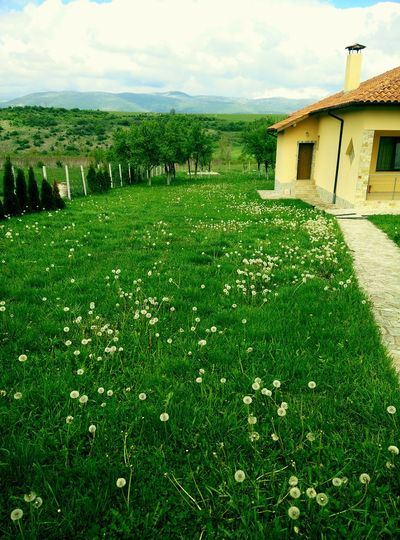 Bulgaria's nature Nature Beautiful Green Bulgaria Home Relax View Peaceful First Eyeem Photo