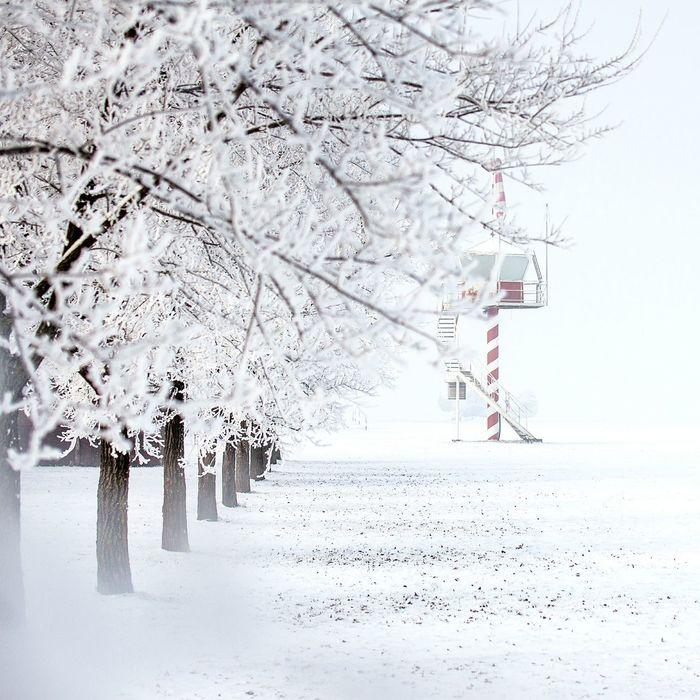 Airport Hajduszoboszlo - Hungary Winter Wintertime Canon Canon500d Tamron Tamron 60mm Macro Tree White Whiteporn Nature Nature Photography Nature_collection