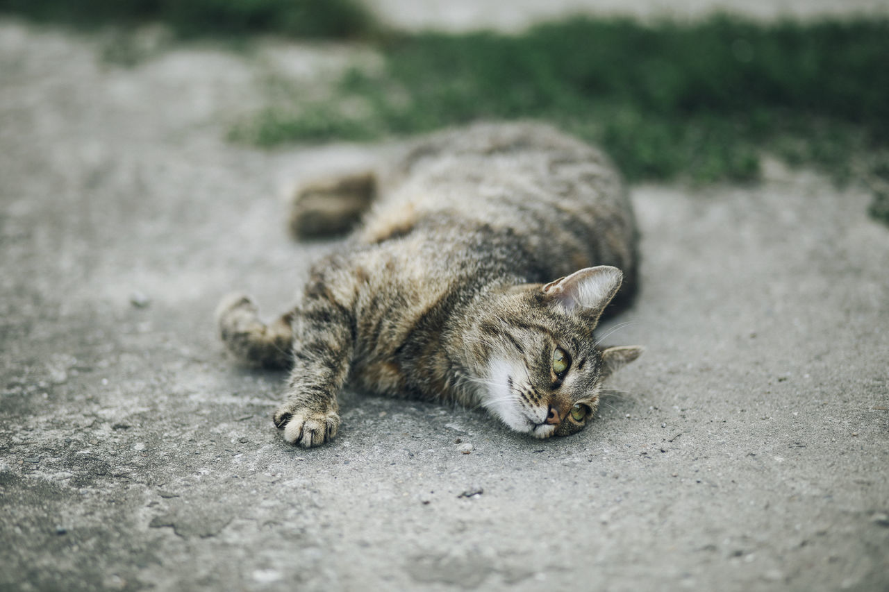 Lazy Sunday in Mielec, Poland. Animal Themes Animals In The Wild Close-up Day Domestic Animals Domestic Cat Feline Mammal Nature No People One Animal Outdoors Pets