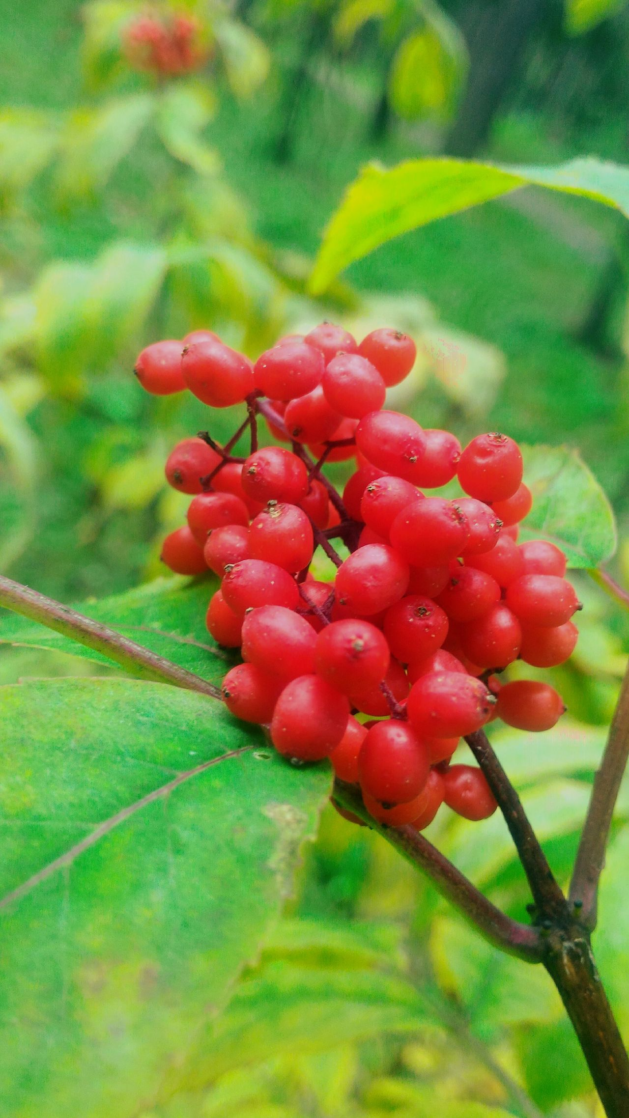 Small red berries Bright Berry Berries Red Colour Of Life Small Berries Nature_collection Nature Photography Nature