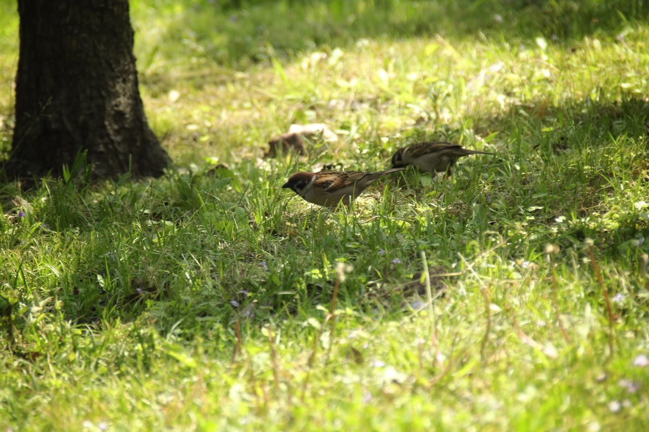 EyeEm Nature Lover Sparrow Tender Green Nature_collection Eye4photography  Taking Photos Light And Shadow Hello World Animal_collection I Love Birds EyeEm Best Shots Lovely Nature Birds_collection