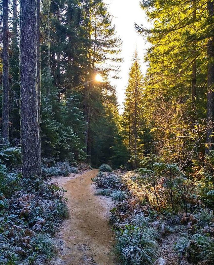 A frosty walk through the woods ❄🌲 @pnwonderland @pnwisbeautiful @oregonnwOregonnw Cascadiaexplored Pacificnorthwest Lifeofadventure PNWonderland PNW Thatpnwlife Wildernessculture Pnwcollective Thenwadventure Naturelovers Northwestisbest Upperleftusa Wilderness Oregonexplored Getoutside ExploreEverything Wanderlust Northwest Discoveroregon Pnwlife Nw Instagram Scenic Theoutbound ourcamplife snow frost forest forest_masters