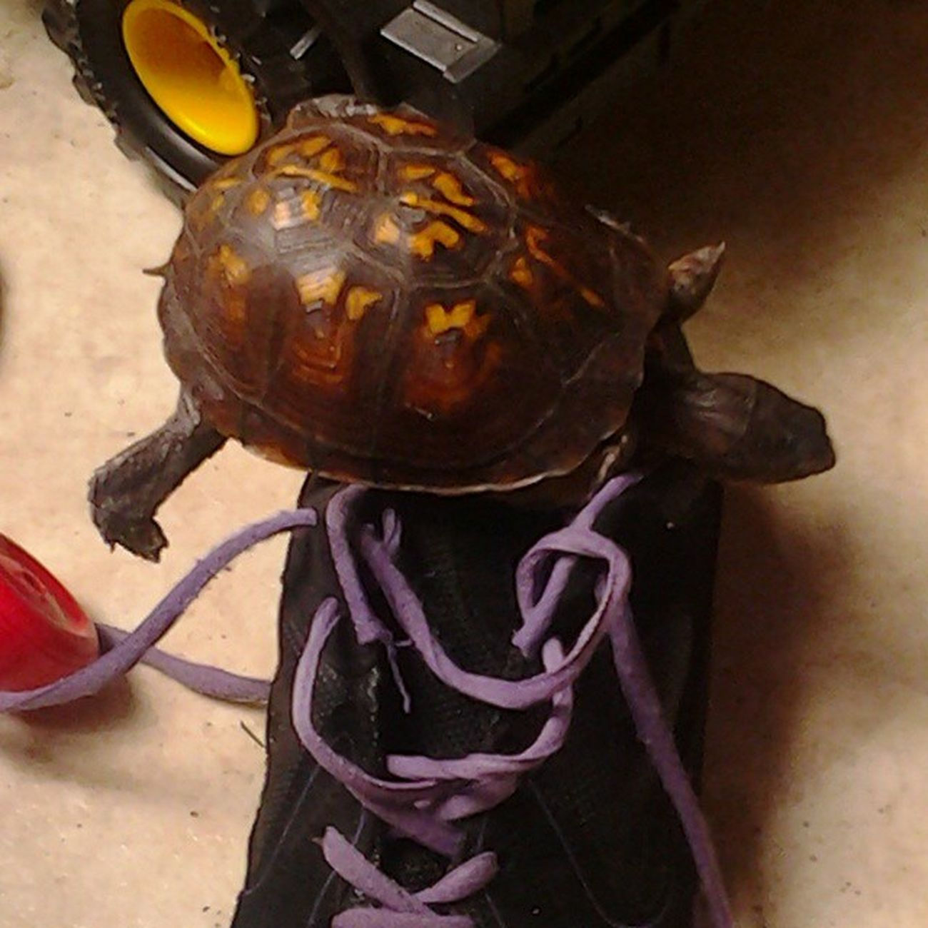 Shoe Surfin Turtle Instaturtle INSTAFAMOUS INSTAFAME