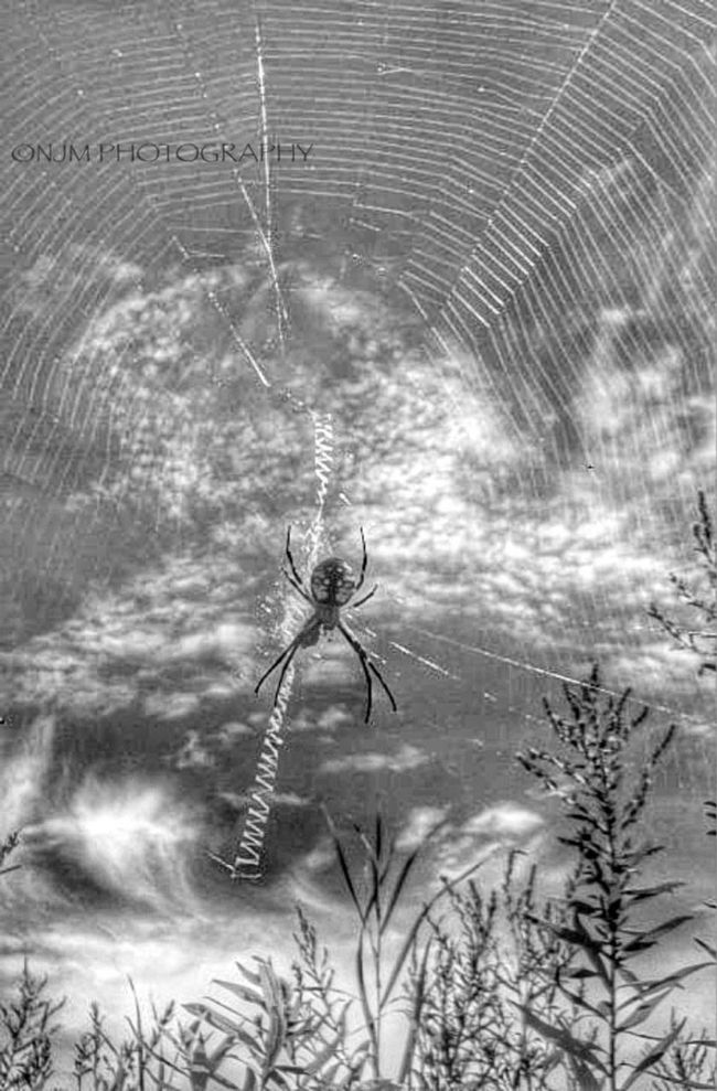Diggin into my vault... This Spider and Spiderweb caught me by surprise one late Summer day. Took a few shots. Had my old 3 MP sony cybershot. Waybackplayback