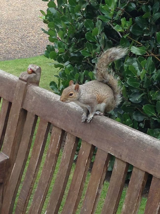 Cute squirrel London City Big City Life Big City Kensington Palace Kensington Gardens Animal Squirrel Cute Hello World