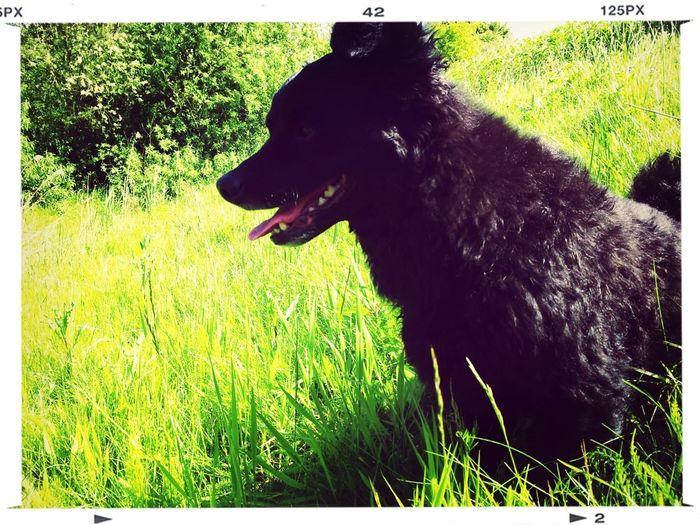 My Dog :*