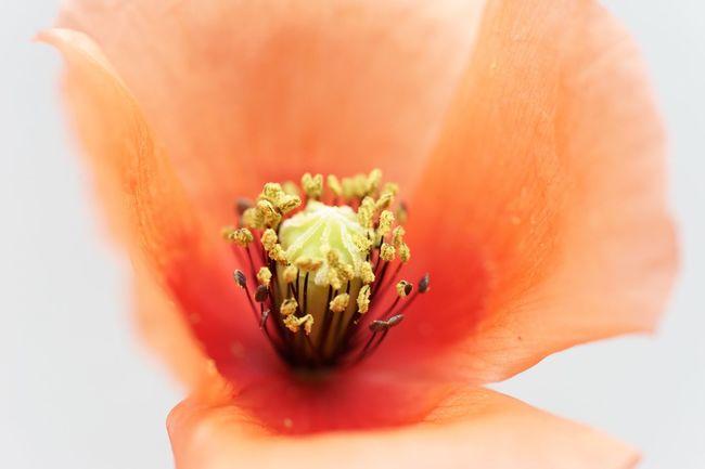 Red Flowers Flowers Spring Flowers Cold Spring EyeEm Nature Lover EyeEm Best Shots - Nature Sony Sony α♡Love