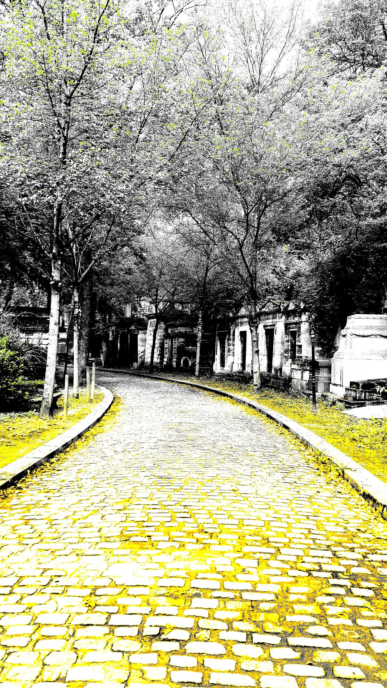 Check This Out Cobblestone Fall In Paris Paris Scene Pattern Père Lachaise Père Lachaise Cemetery Stone Path Tombstone Traveling Tree