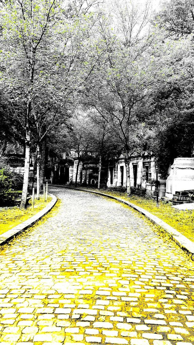 Check This Out Cobblestone Fall In Paris Paris Scene Pattern Père Lachaise Père Lachaise Cemetery Stone Path Tombstone Traveling Tree
