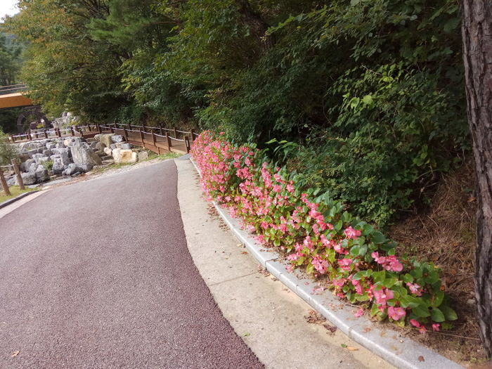 Growth Plant Nature Flower Green Color The Way Forward Outdoors Beauty In Nature Road