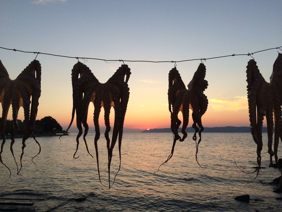 Beautiful stock photos of octopus, Bay, Drying, Food, Food And Drink