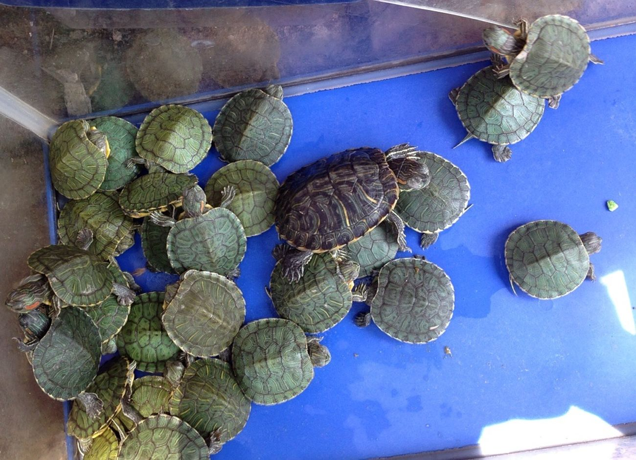 Turtles 😘 Animal By ITag Pets By ITag