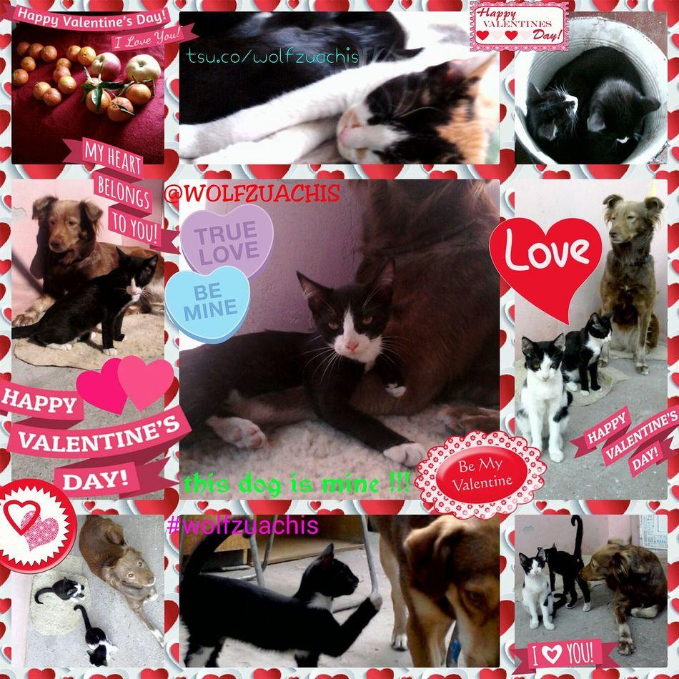 Valentineday Bemyvalentine Colaj @wolfzuachis Wolfzuachis Loveislimitless Collage Happyvalentinesday HappyValentine'sDay  HappyValentine Valentine's Day