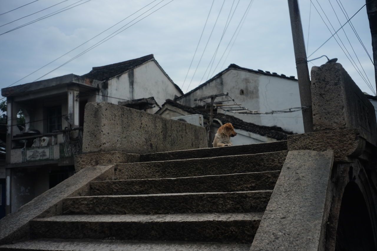 built structure, architecture, building exterior, one animal, house, sky, animal themes, mammal, staircase, outdoors, low angle view, steps, steps and staircases, day, domestic animals, cloud - sky, domestic cat, residential building, no people, pets