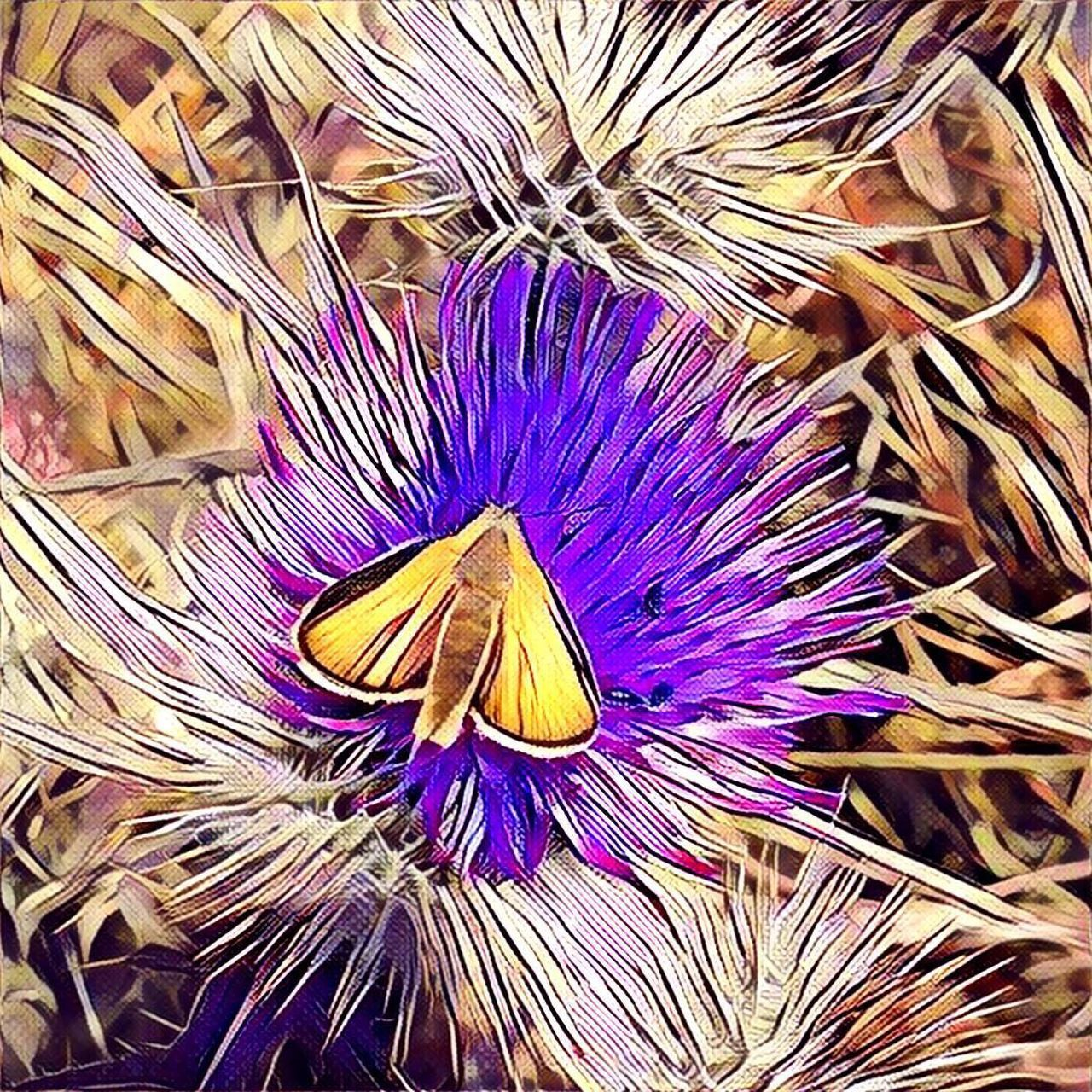 Nature Graphic Illustration Painterly Photo Art Iphone6s ShotOnIphone Butterfly Insect IPhoneography Wildflowers