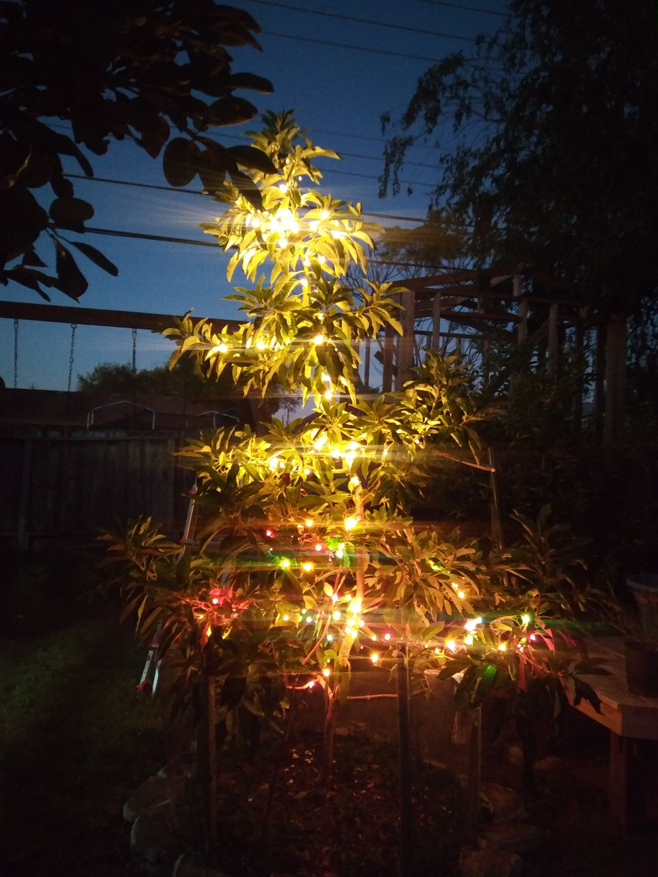 Avacado Tree avacado tree in lights Tree Celebration Illuminated Nature Outdoors Christmas Lights Night Holiday - Event No People