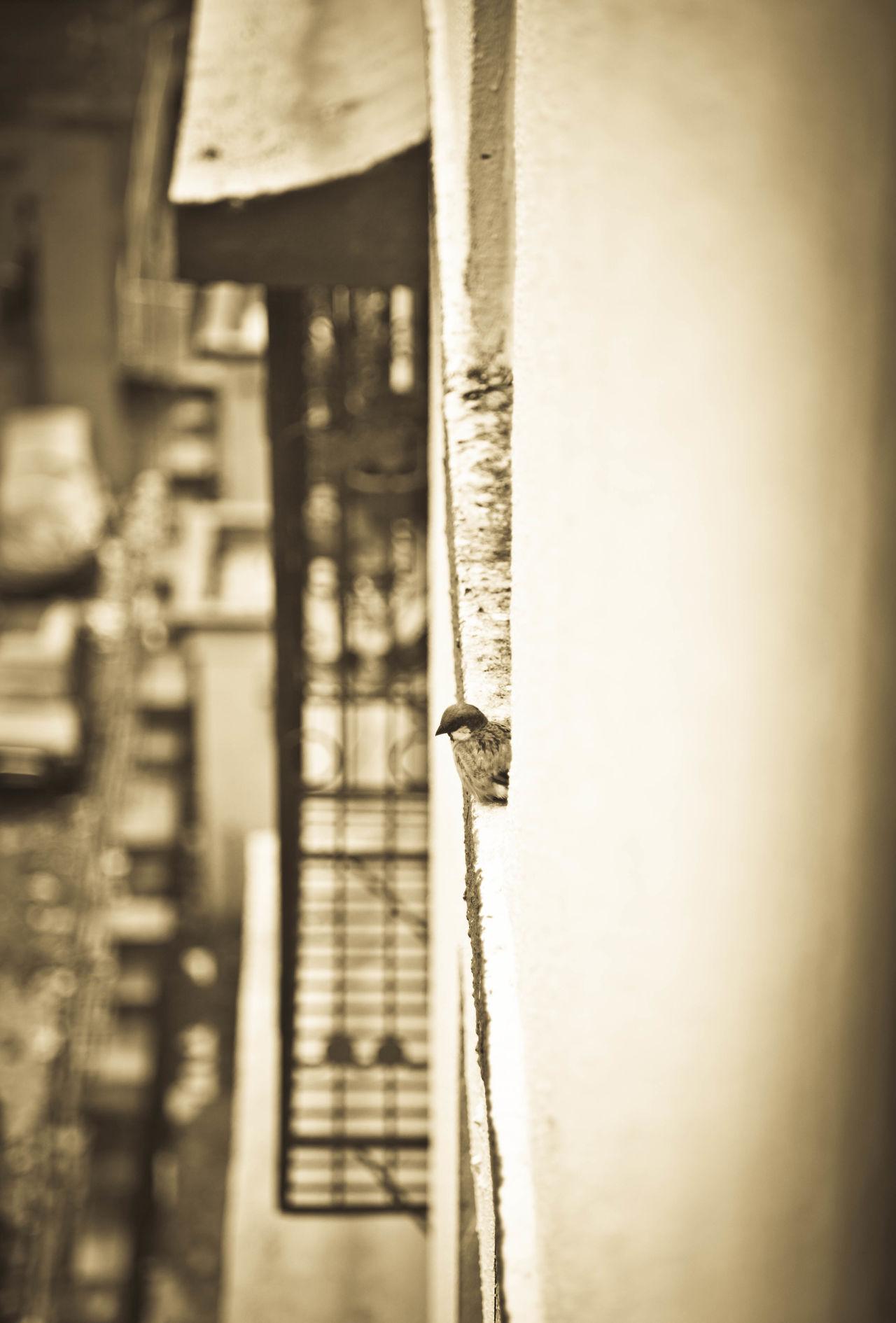 India Mumbai Busy Street Lone Bird Blackandwhite Nature Solitude Escape Zoned In