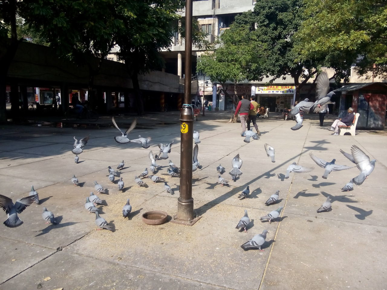 bird, large group of animals, animal themes, animals in the wild, flock of birds, tree, animal wildlife, outdoors, incidental people, day, building exterior, architecture, real people, built structure, one person, flying, spread wings, one man only, mammal, people
