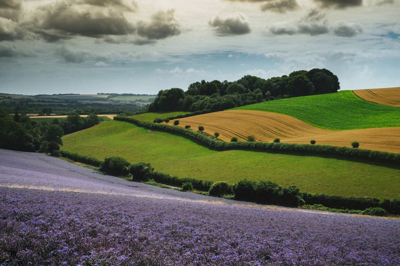 Summer Views Colours Nature Landscape_photography Landscape_Collection Protecting Where We Play British Landscape English Countryside English Summer Fieldscape Fields