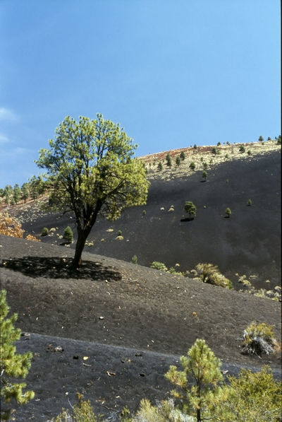 Sunset Crater Monument 1993 Beauty In Nature Blue Clear Sky Day Growth Landscape Lava Field Nature No People Non-urban Scene Outdoors Physical Geography Plant Remote Scenics Shadow Solitude Summer Sunlight Tranquil Scene Tranquility Tree Vacations Water