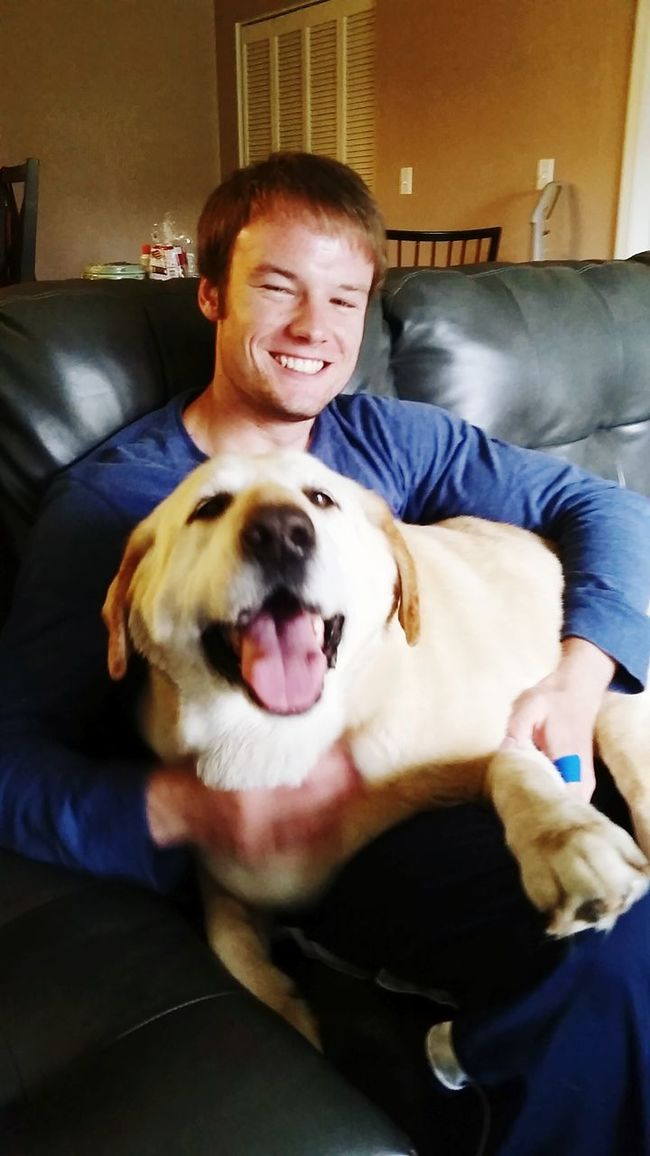 Bear the lap dog Cute Pets Animal_collection Animal Love The Bf Dogs Doglife Yellow Labs