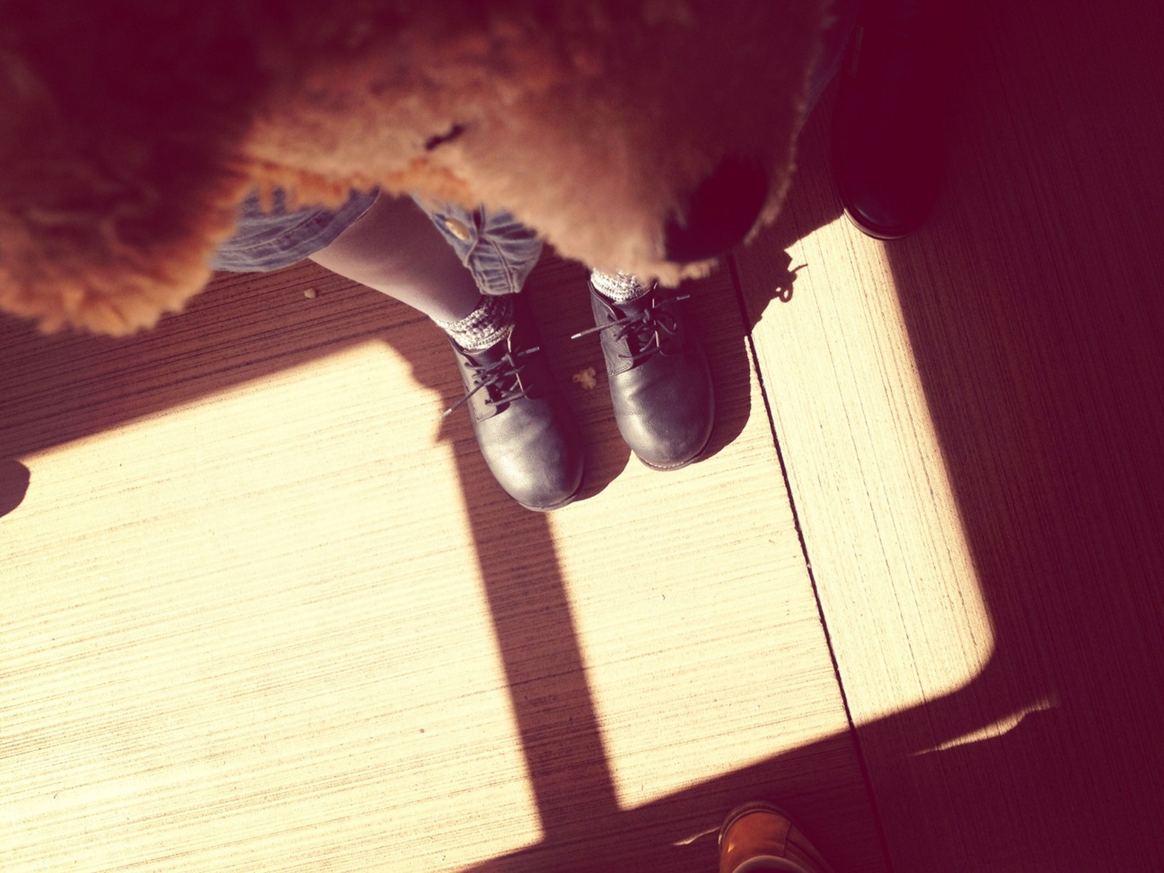 indoors, high angle view, one animal, animal themes, shadow, shoe, low section, sunlight, domestic animals, pets, sitting, wood - material, home interior, person, part of, black color, footwear