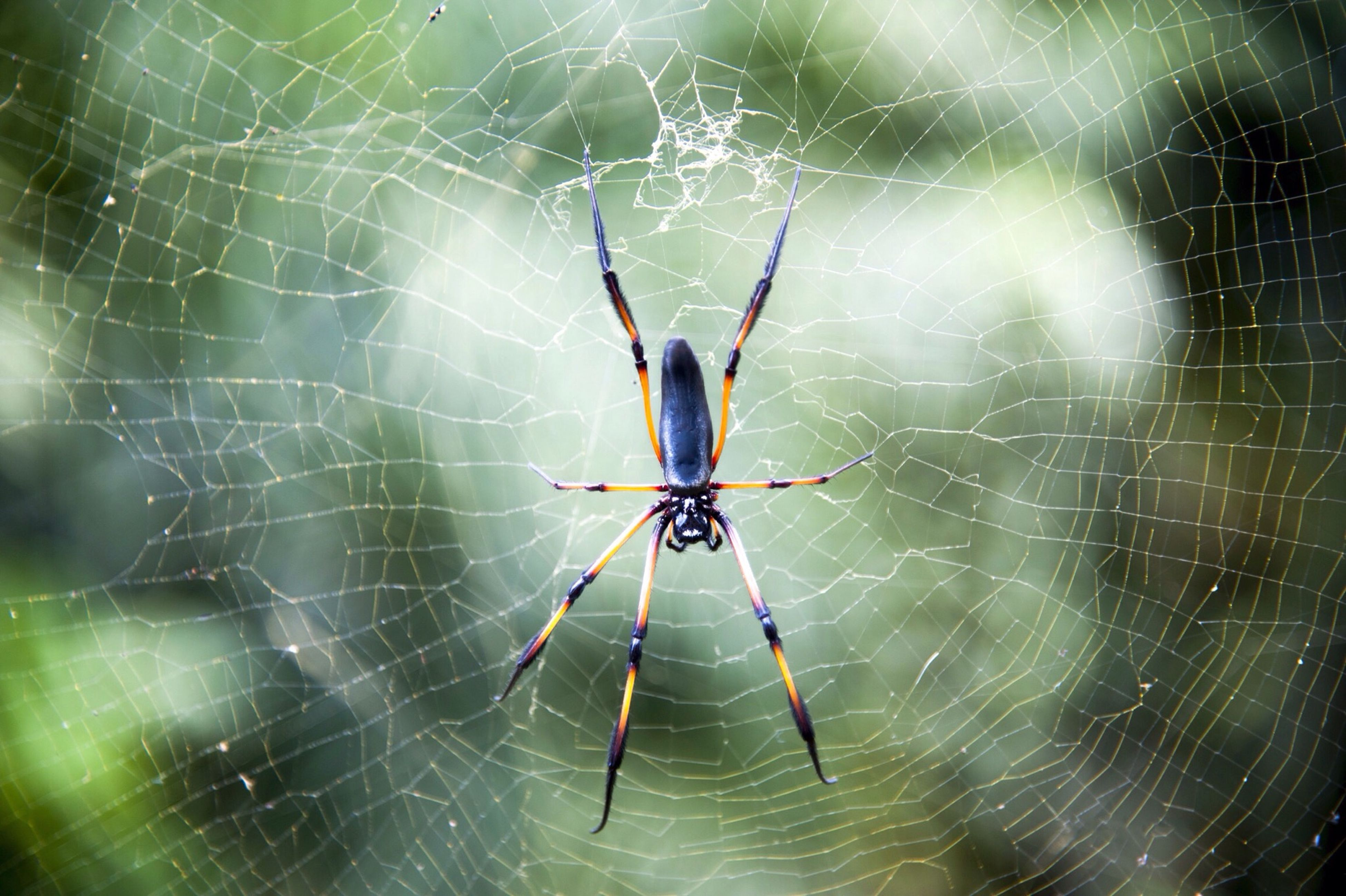 spider web, spider, animal themes, one animal, insect, animals in the wild, wildlife, spinning, web, focus on foreground, close-up, natural pattern, arachnid, nature, survival, outdoors, complexity, no people, pattern, day