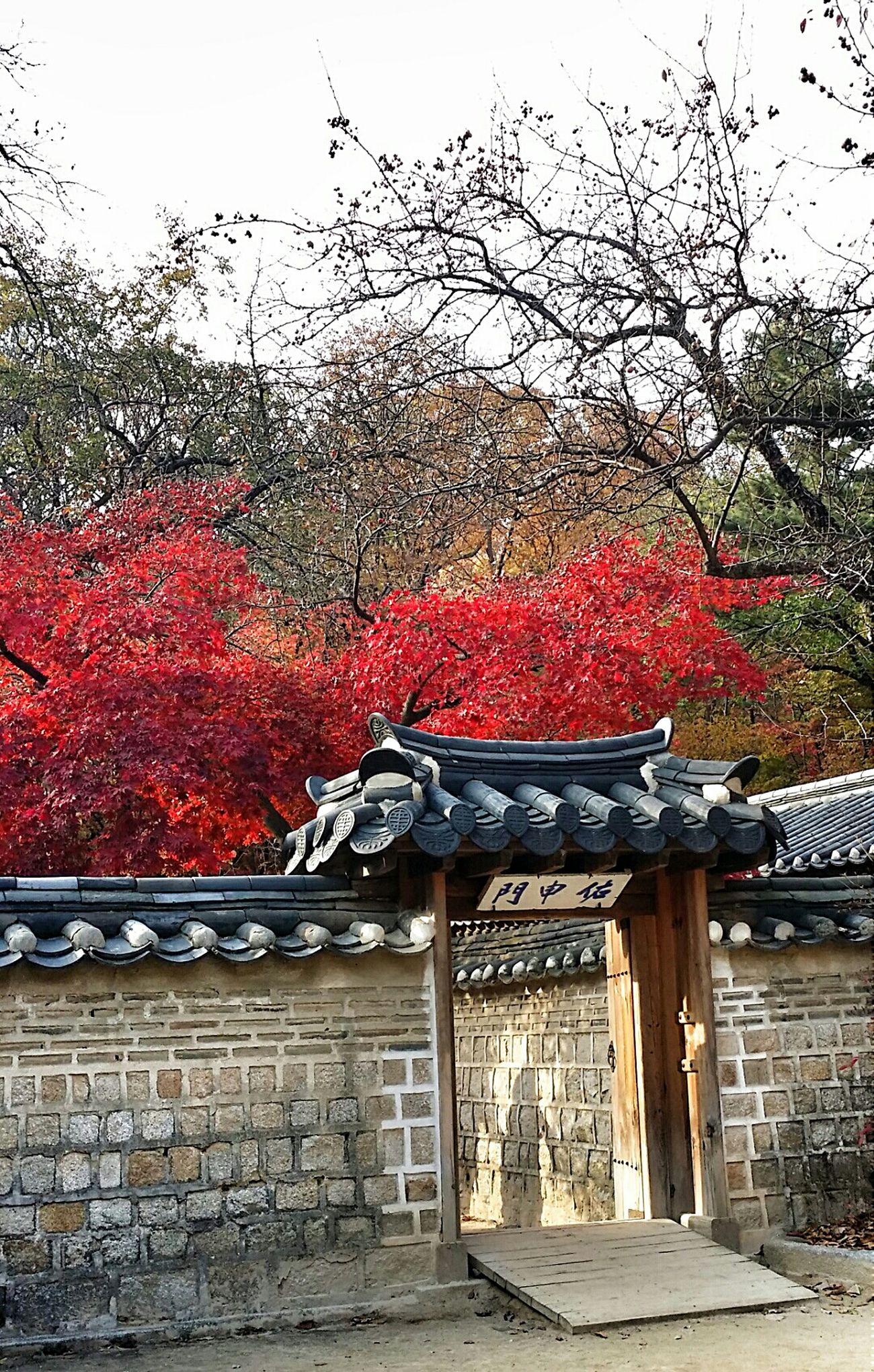 Autumn Colors Autumn2014 Seoulautumn2014 Changdeokgung Palace Seoul Korea Travel Photography Beautifulkorea