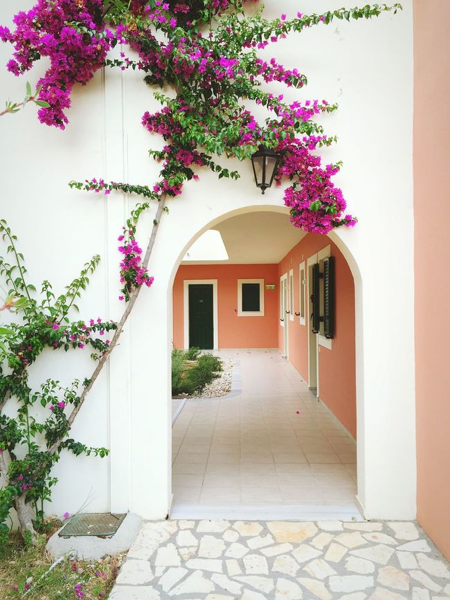 Greek House Greece Flowers On The Wall Colourful Doors Portal Summer Holidays Eyem Best Shots