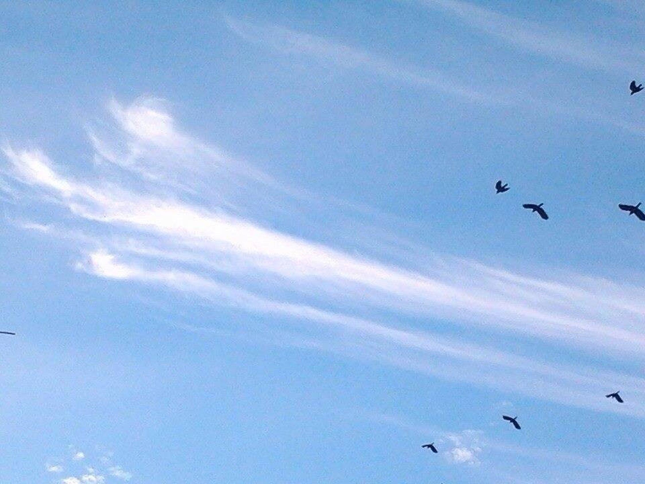 Flying Bird Animal Wildlife Sky Outdoors Spread Wings Cloud - Sky