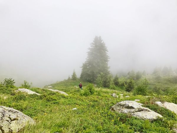 Nature Hike Hiking Foggy Alps Fog Tree Nature Tranquility Beauty In Nature Tree Tranquil Scene Day Landscape Mountain Scenics Outdoors Grass Growth Real People Cold Temperature Hazy  One Person