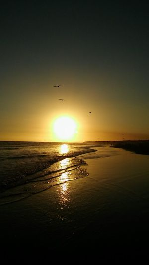Animal Themes Animal Wildlife Beach Beauty In Nature Beauty In Nature Bird Buenos Aires, Argentina  Day Flying Horizon Over Water Idyllic Nature Necochea. Argentina No People Outdoors Reflection Scenics Sea Silhouette Sky Sun Sunset Tranquil Scene Tranquility Water