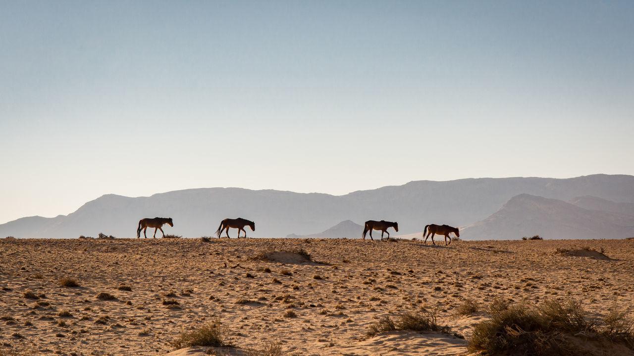 Side View Of Horses Walking At Desert Against Sky