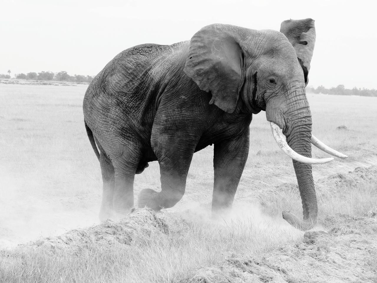 Safari Africa Share Your Adventure Animal_collection EyeEm Animal Lover Animal Portrait EyeEm Best Shots - Black + White Elephant Kenya Eye4black&white